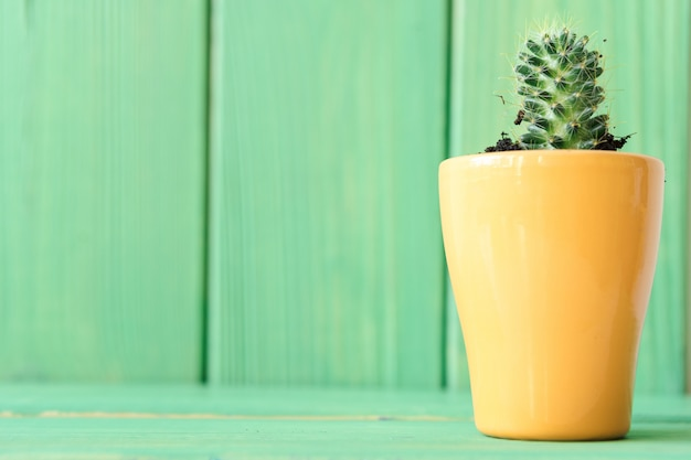 Close up view of a succulent against green wooden