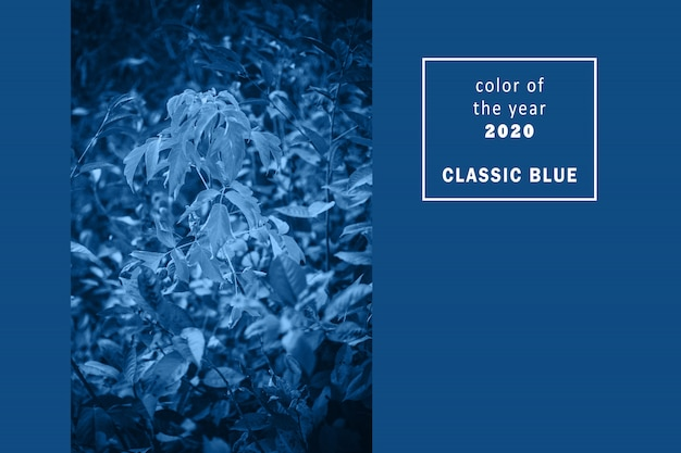 Close-up view of tree branches in trendy classic blue color. copy space.