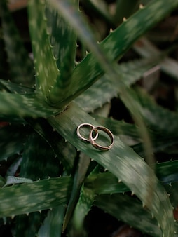 Close up view of two gold wedding rings lying on the cactus leaf