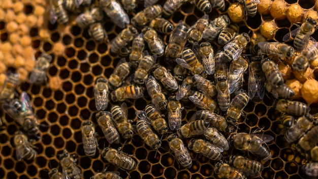 Close up view of the working bees on honey cells. working bees on honeycomb
