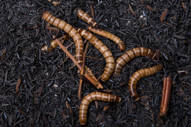 Close up view of worms on the ground
