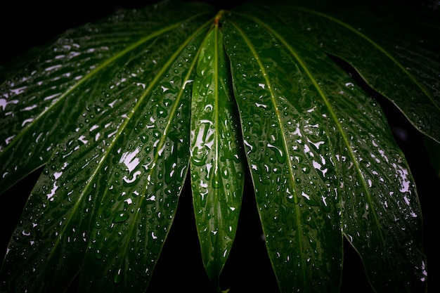 Close up water drop on leaf
