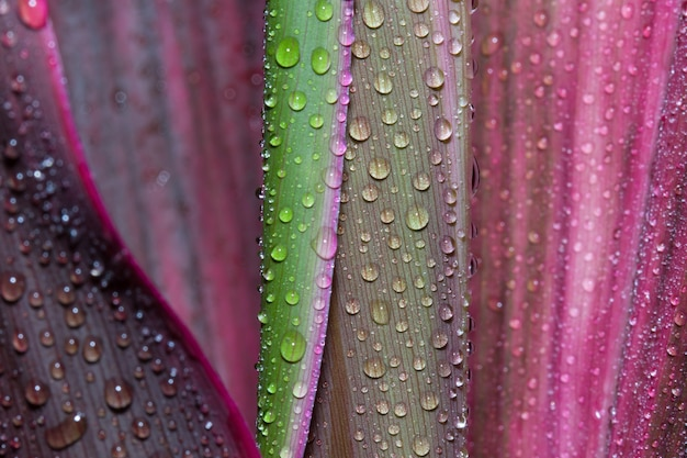 Close up water droplet on vibrant petiole of flowers after rain