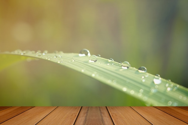 Close up of water drops on green leaf with nature in rainy seaso