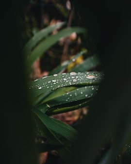 Close-up of water drops on a plant's leaves