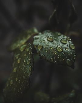 Primo piano di gocce d'acqua sulle foglie di una pianta
