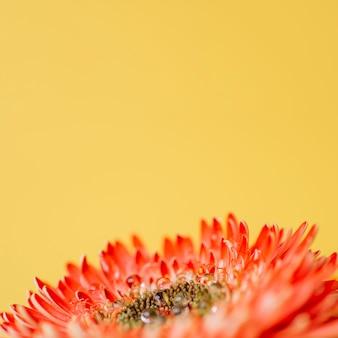 Крупным планом вода на лепестках цветка
