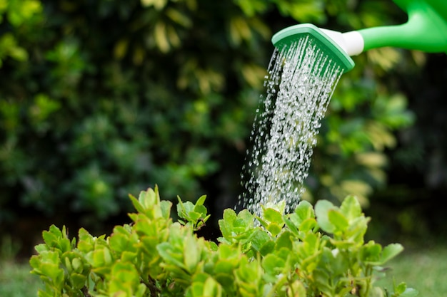 Close up watering plants