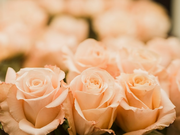 Close up of wedding rose bouquet