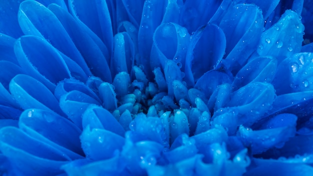 Крупным планом мокрые синие лепестки