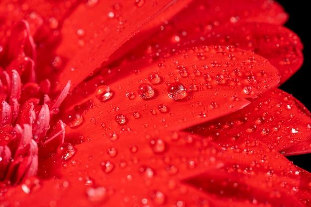 Fiore rosso bagnato del primo piano