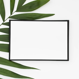 Close-up of white blank frame with green palm leaves isolated on white background