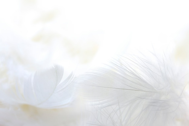 Close up white feather background