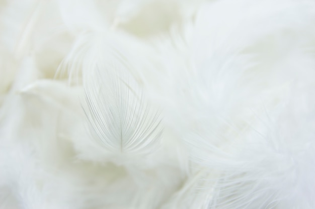 Close up white feather background.