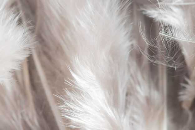 Close-up white feathers organic background