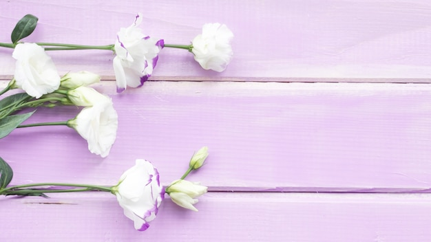 Close-up of white flowers on wooden plank backdrop