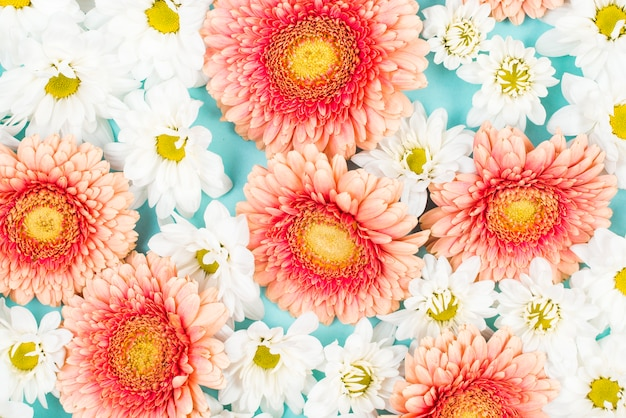 Close-up of white and pink flowers background