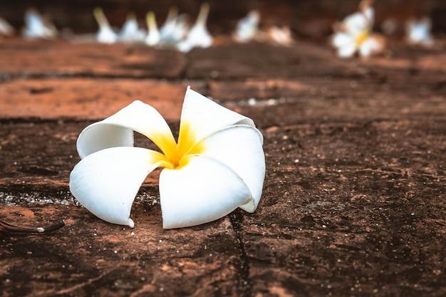 Крупным планом белый цветок плюмерия на земле