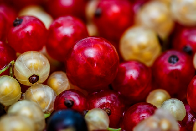 Close up white or yellow, red,  black  raw currant