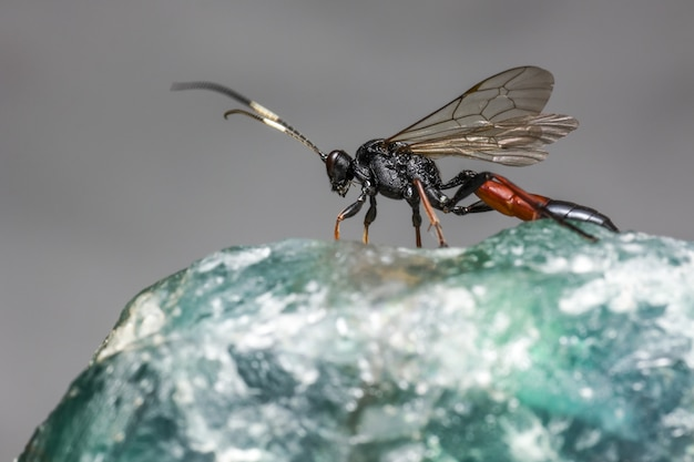 Close up of winged insect on rock