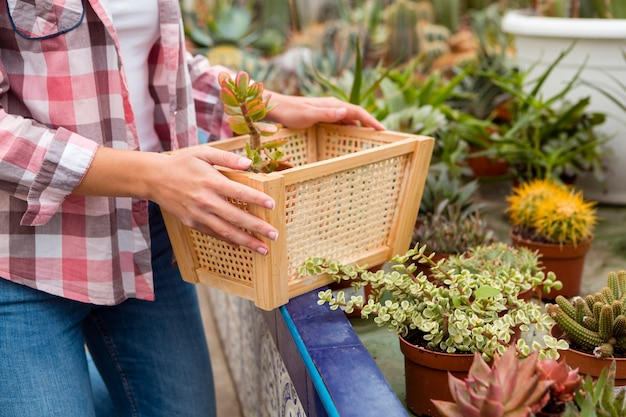 Close-up woman arranging flower pots in greenhouse