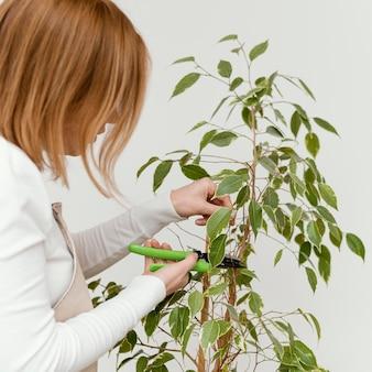 Close-up woman cutting plant