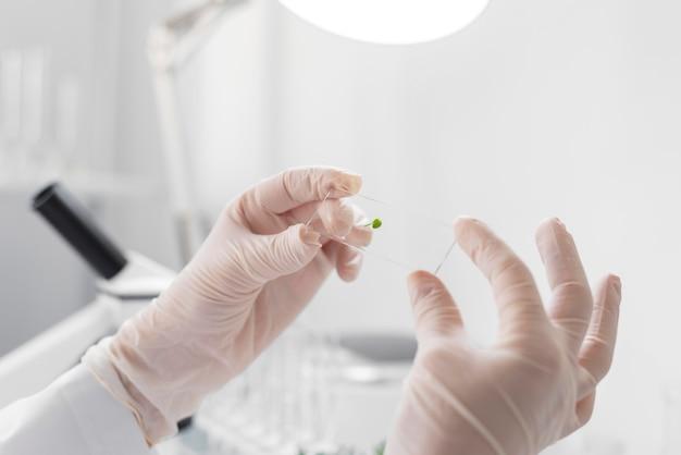 Chiuda sull'esperimento della donna sul germoglio