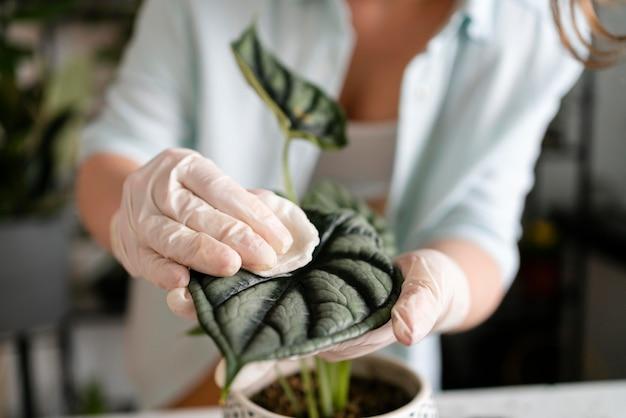여자 성장 식물을 닫습니다
