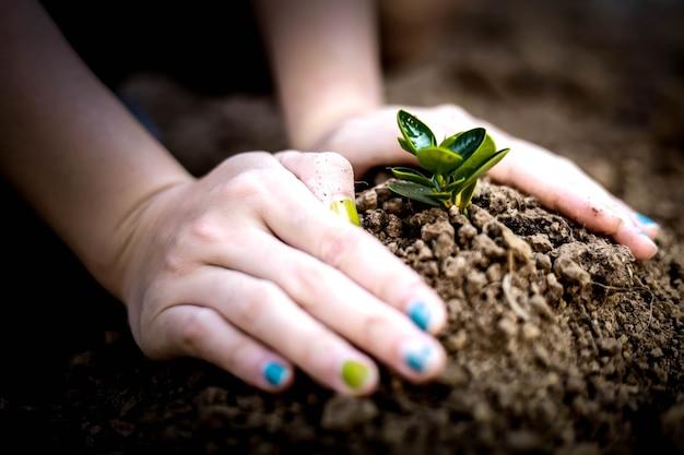 Крупным планом женщина сажает саженцы обеими руками, сажает деревья, сажает деревья, чтобы уменьшить глобальное потепление, идеи по посадке деревьев. глобальное потепление.