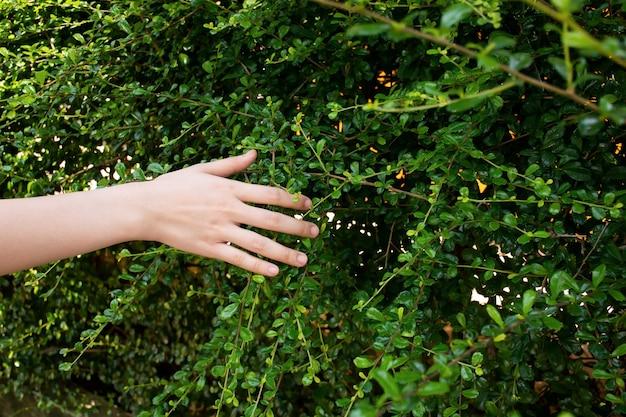 彼女が庭を歩いている間、木の葉に触れている女性の手を閉じます。