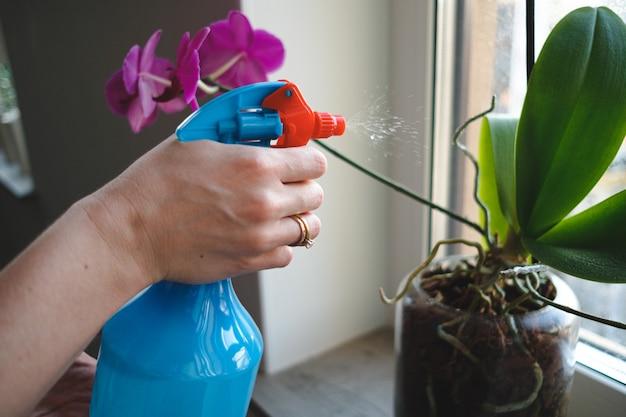 アパートの盆栽の木に水をまく女性の手を閉じる