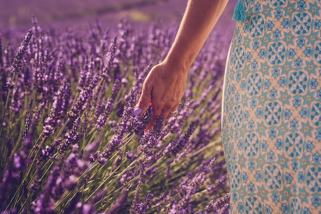 Close up of woman hand with colorful nail touching and feeling lavender flower in the field - concept of freedom nature and beauty people lifestyle - spring and summer season outdoors