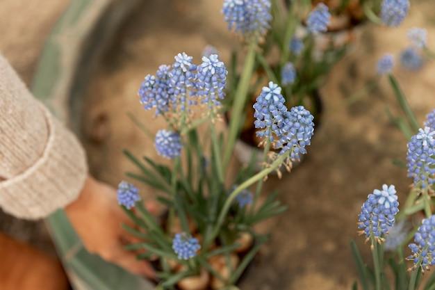Donna del primo piano che tiene i fiori blu
