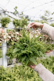 Close-up woman holding green plant