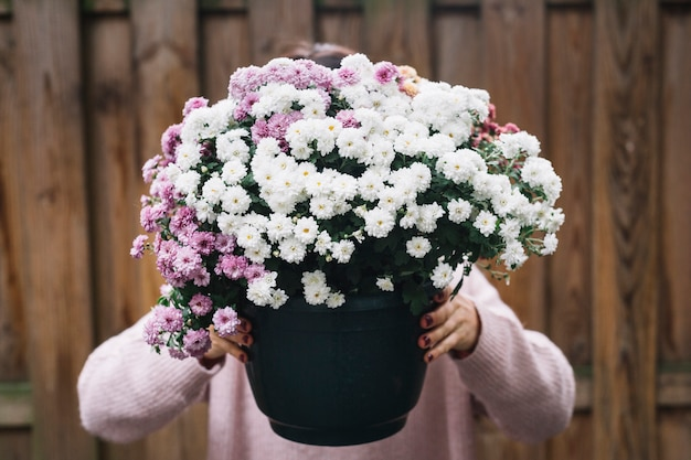 Close-up of a woman holding potted plant of pink and white aster flowers in front of her face
