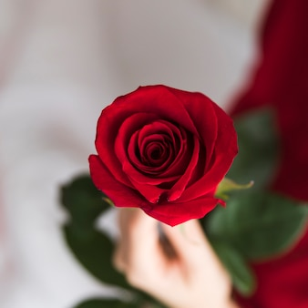 Close-up woman holding red rose