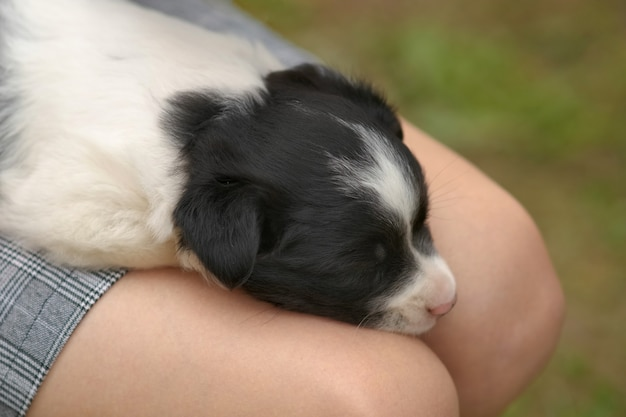 Close up of a woman holding small puppy on her lap.