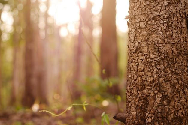 자연 배경 흐림 효과와 함께 숲에 있는 나무의 클로즈업 나무 패턴.