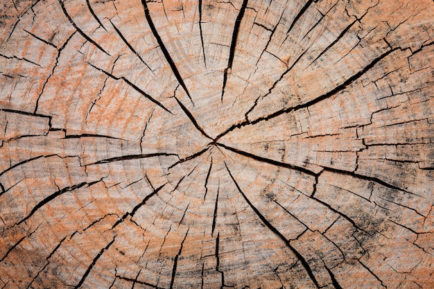 Close up wooden cut texture of stump with rings