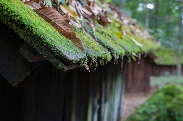 Close up wooden roof of a cottage covered with moss
