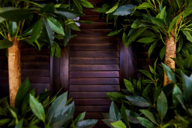 Close-up wooden shutters in thick and lush foliage of trees.