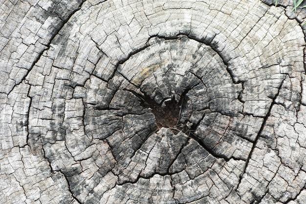 木の切り株をクローズアップ