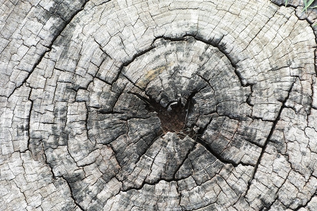 Close up wooden stump  round cut down tree with annual rings as a wood texture