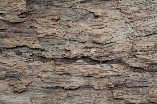 Close up of wooden texture