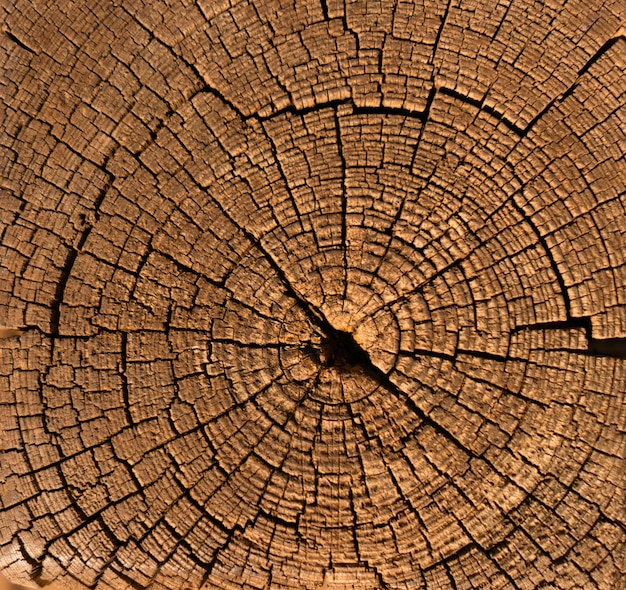 Close up wooden textured surface