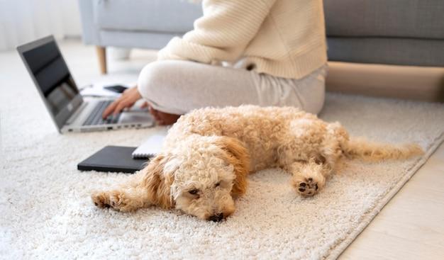 家で労働者と犬をクローズアップ
