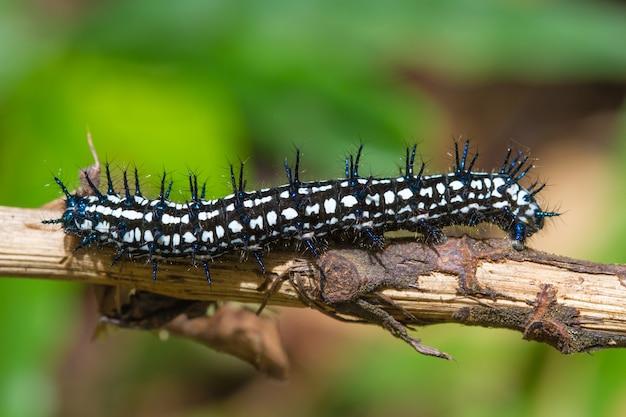 Закрыть червь, гусеницы