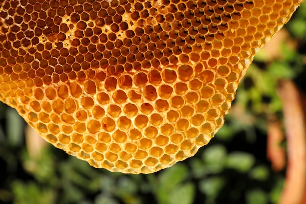 Close up yellow beautiful honeycomb with honey