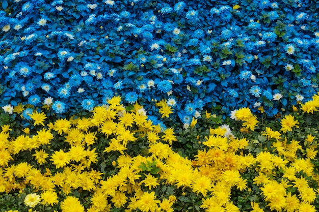 Close-up of yellow and blue flowers in a garden