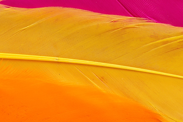 Close-up yellow feather
